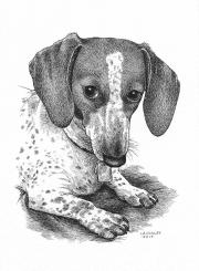 Sookie-Dog-Portrait-Laurie-A.-Conley